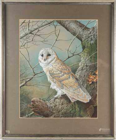 Basil Ede (1931-2016), 'Barn Owl', gouache and bodycolour, signed to lower right corner, 47.5 cm x