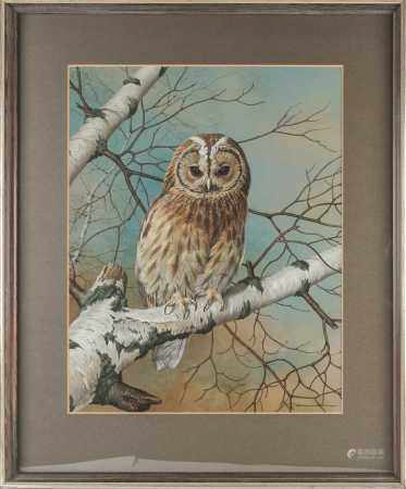 Basil Ede (1931-2016), 'Tawny Owl', gouache and bodycolour, signed to lower right corner, 47.5 cm