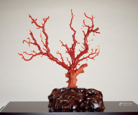 珊瑚树摆件