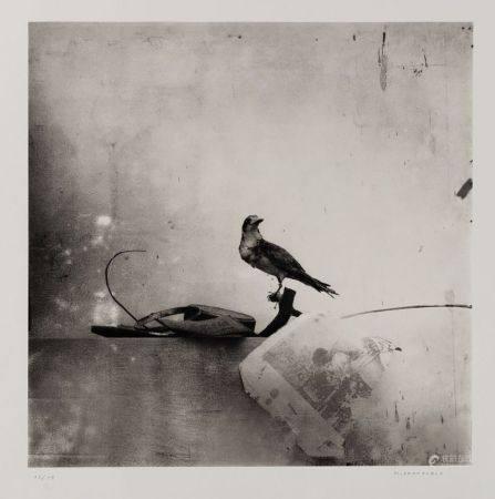 """MANUEL FRANQUELO LERIN  (1953 / .) """"Still life with bird"""", 2003"""