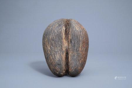 A sea coconut or coco de mer (lodicea maldivica), Seychelles