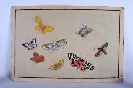 Chinese School (19th Century) Watercolour, Butterflies & Moth. 60 cm x 40 cm.