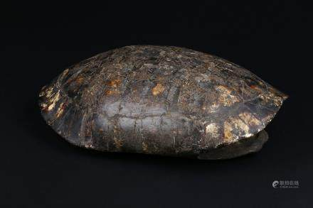 An inscribed tortoise shell