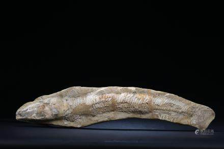 A fish fossil stone