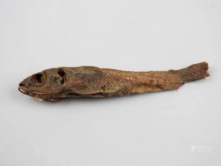 Momie de poisson liée aux Mystères,poisson Barbus du culte isiaque.L'ichtyolâtrie s'est surtout