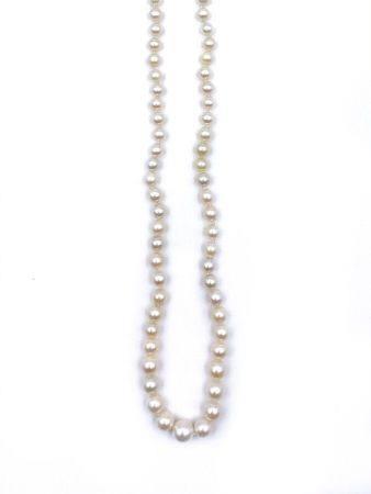 COLLIER de perles de culture blanches, en chute. Fermoir en or jaune (750 millièmes).  Long.: