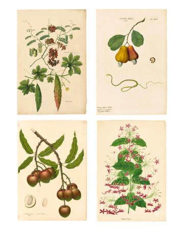 FOUR BOTANICAL STUDIES COMPANY SCHOOL, MADRAS, CIRCA 1839-49