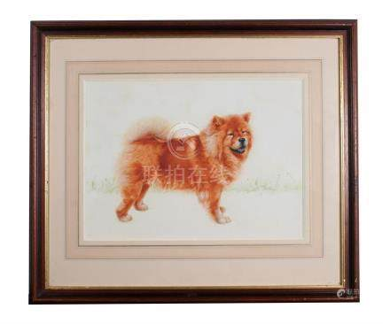 20th century modern watercolour - Study of a Chow - framed & glazed, 38cms by 29cms (11ins by